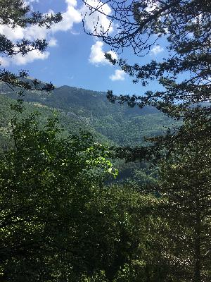 panorama nel bosco con montagna