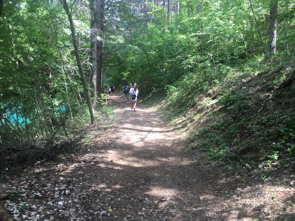 percorso sentiero bosco con persone