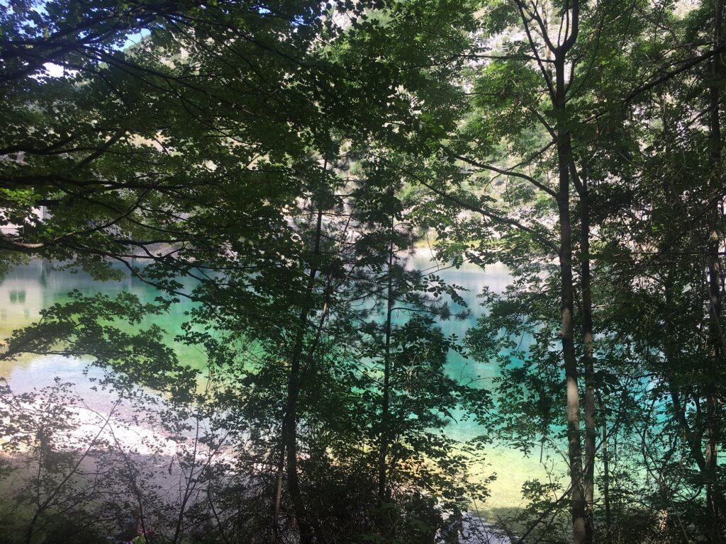 lago con alberi
