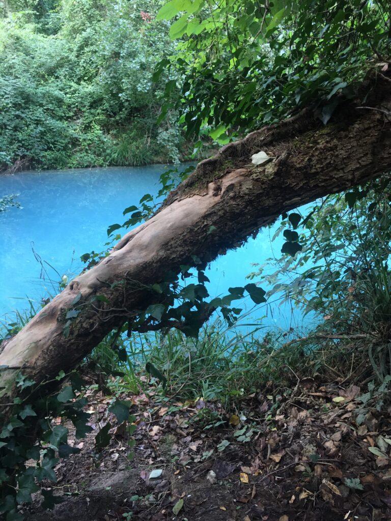 lungo fiume percorso con albero