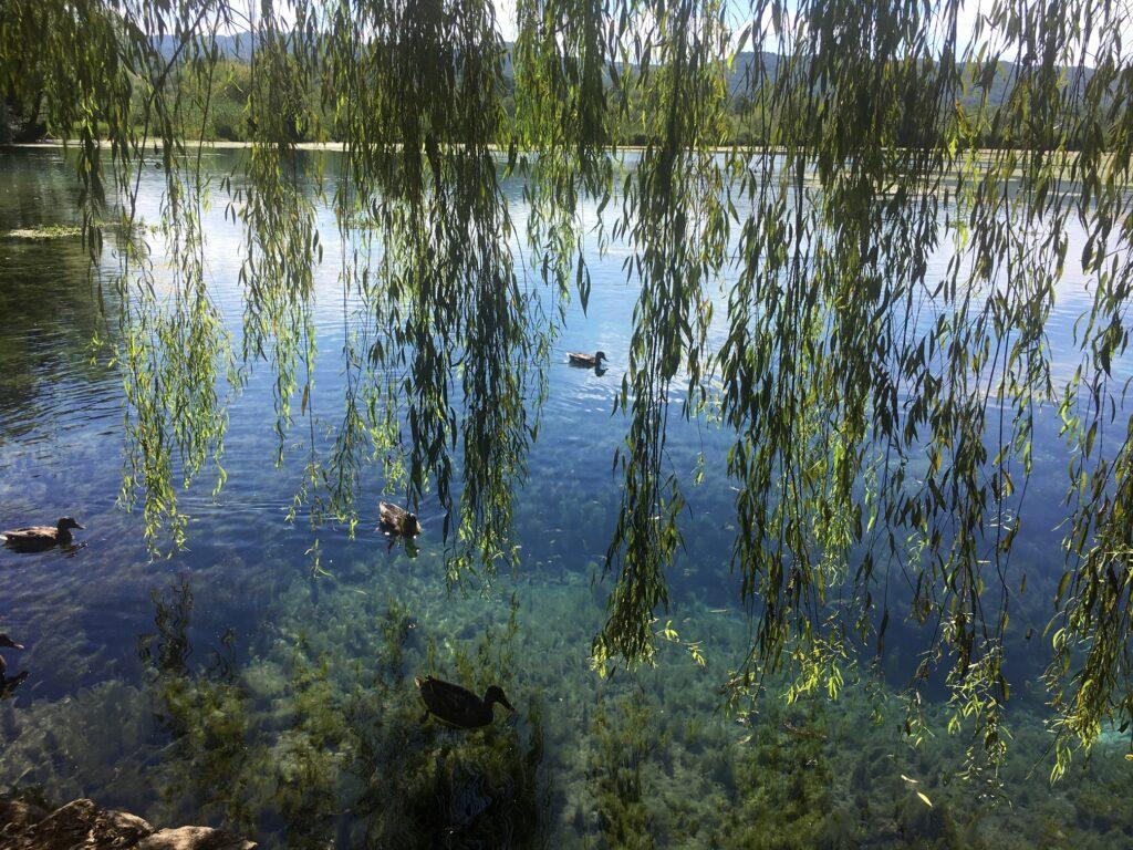 lago posta fibreno con vegetazione