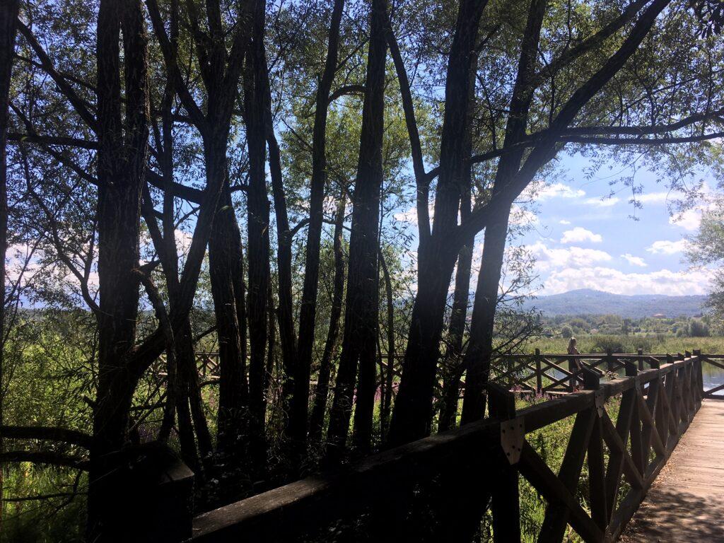 ponte di legno e alberi sul lago